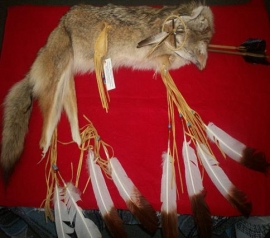 Coyote Pelt Quiver